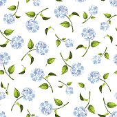 Seamless pattern with blue hydrangea flowers. Vector illustration.