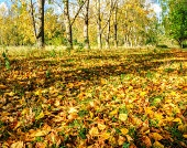 Park in autumn with fallen leaves - autumn landscape