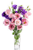 bunch of violet and pink eustoma flowers in glass vase