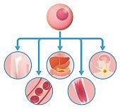 stem cell and regenerative medicine