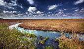 Marshes and reed