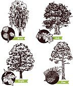 Sketch Tree Leaves Design Concept