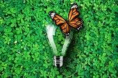 Light bulb on green grass background, monarch butterfly, concept idea