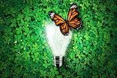 Glowing light bulb on grass background, monarch butterfly, concept idea