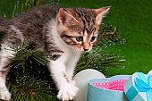 Kitten on Christmas tree