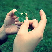 Four Leaf Clover - A symbol of good luck