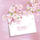 Cherry Blossom Spring Background - with Card for your Text