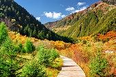 Wooden boardwalk across colorful fall woods. Autumn landscape
