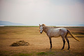 white horse standing in open meadow