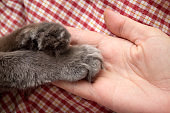 Fluffy gray kitten paws in the women's palm, hand
