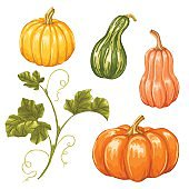 Set of pumpkins. Collection decorative vegetables and leaves
