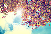 Autumn leaves background in fall season