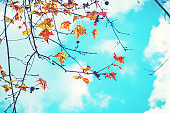 Autumn leaves and sky background in fall