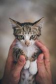 Petting kitten
