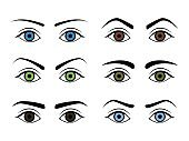 Different Type Woman Eyebrows Set. Vector