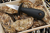 Hollow oysters  Oyster knife