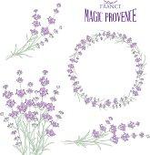 Set of lavender flowers elements
