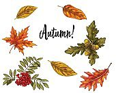 Various green and orange autumn leaves and growths isolated on white background. Vector Illustration