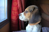 puppy looking out the window