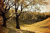 Autumn colorful landscape in sunny autumn landscape park