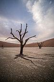 dead trees, Sossusvlei, Namibia