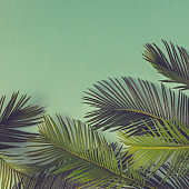Creative nature layout made of tropical leaves and flowers on sky blue background. Flat lay. Summer concept.