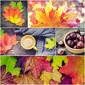 Autumn set, collage from photos