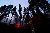Burning Trail