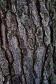Brown Bark of Tree