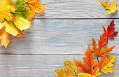 Autumn season background, vibrant maple leaves