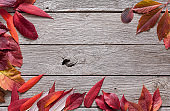 Fall season background, red rowan leaves