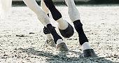 Legs of trotting white horse