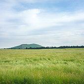 Field in Jeju island