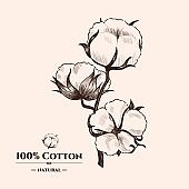 Vector background with  cotton plant