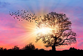 Lone tree with bare branches and flock of Silhouette birds flying