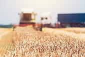 Combine harvester machine harvesting ripe wheat crops