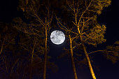 Moon view between the trees