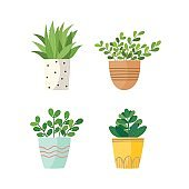 Set of green house plants in pots
