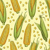 Vector seamless patterns with illustration of corn