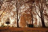 Maple trees at Nishat Bagh Garden in Srinagar