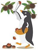 Adelie Penguin/to gather chestnuts