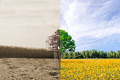 Ecology concept forest drought and forest refreshing