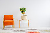 Small tangerine tree in canvas cover