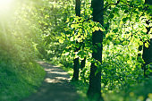 Forest path lit by morning sunlight