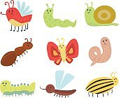 Colorful insects icons isolated wildlife wing detail summer worm caterpillar bugs wild vector illustration