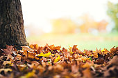 Autumn Leaves Under The Tree
