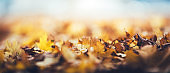 Panoramic Background With Autumn Leaves