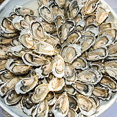 Oysters on the white plate from the Atlantic Ocean