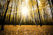 autumn forest trees.