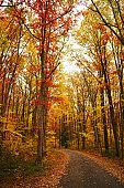 Pennsylvania forest, fall
